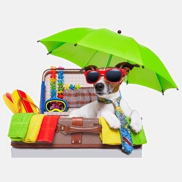 Maya Aycaguer - Happy Dogs Paradise (GE/F)
